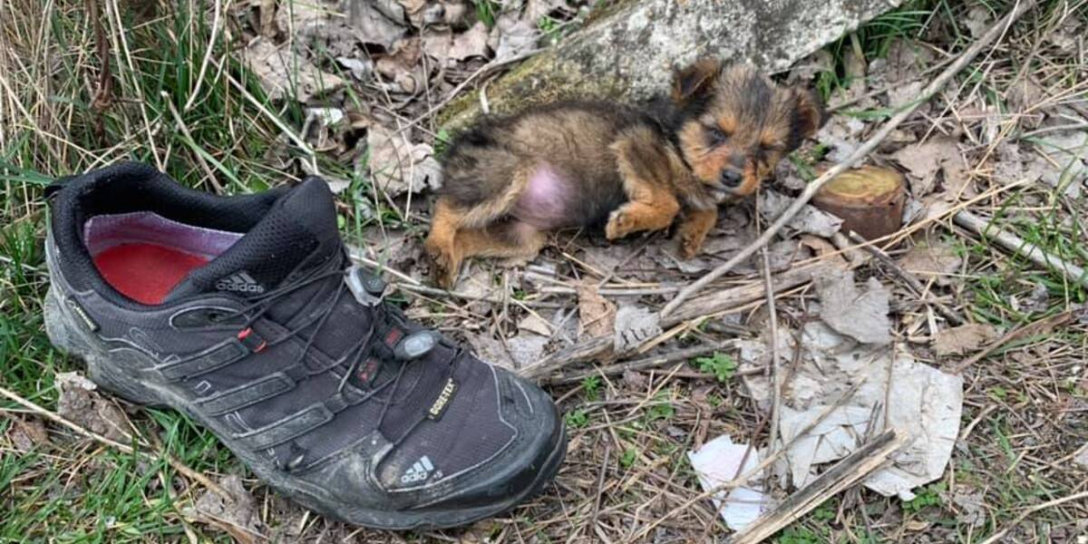 Guy Finds A Puppy Using A Shoe For Shelter And Gives Her A Whole New Life
